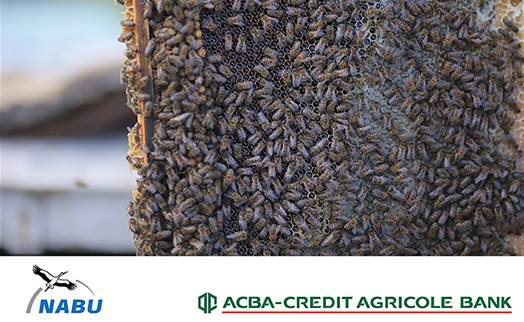 ACBA-CREDIT AGRICOLE BANK launches third organic agriculture development program